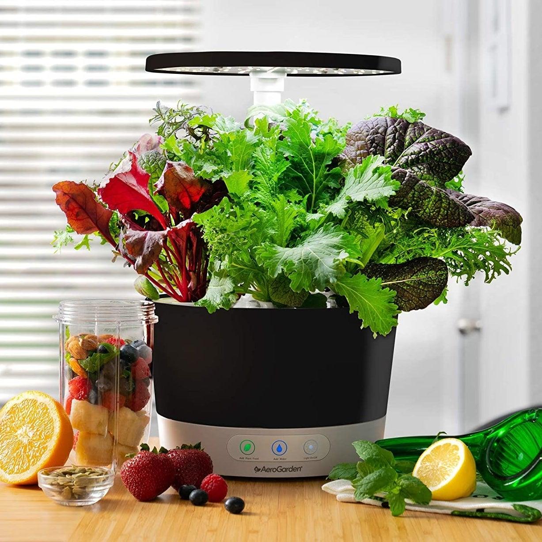 Lettuce inside the Aerogarden