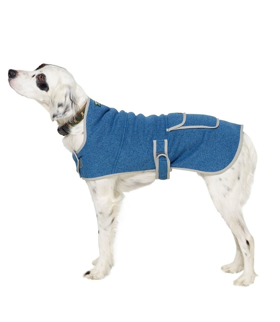 Dog wears sweater fleece