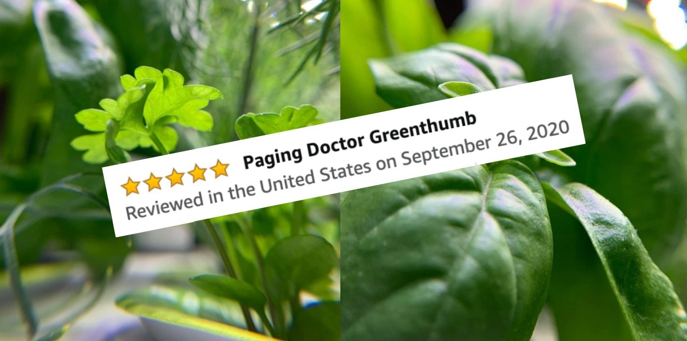 "A reviewer's photo of her successful plants and her five-star Amazon review which says ""Paging doctor Greenthumb"""