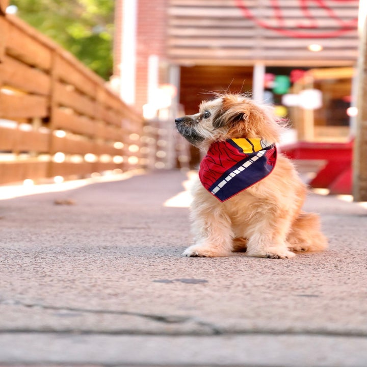doggie wearing a colorful bandana, which is red, yellow, white, and navy blue
