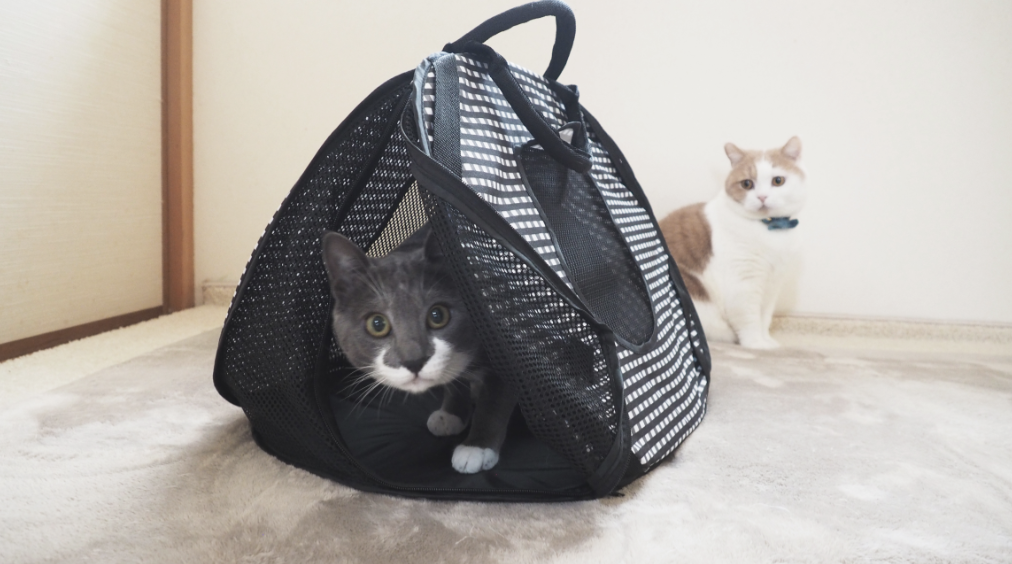 Necoichi Ultralite Pop-up Cat carrier