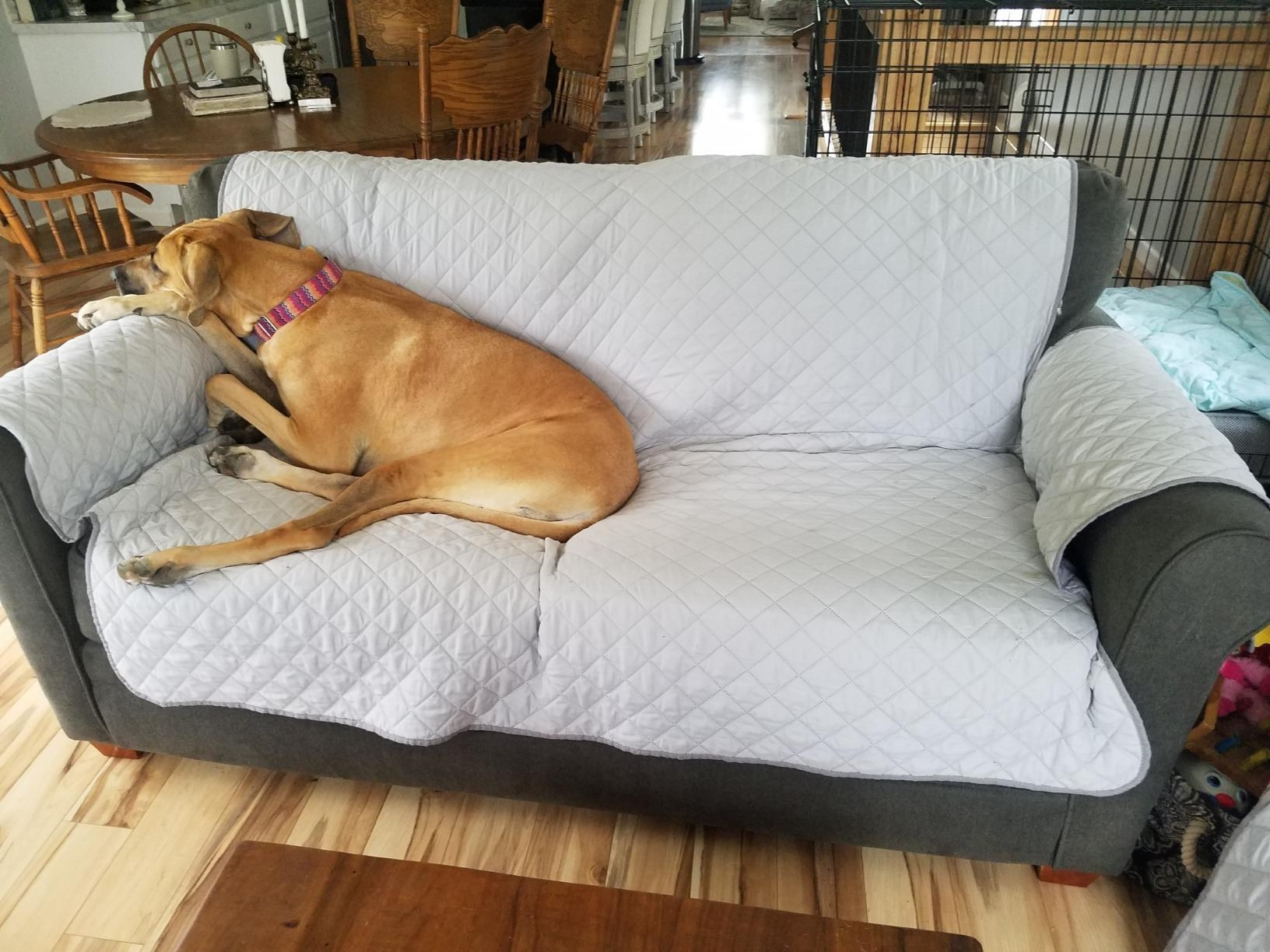 The cover on couch with dog lying on top