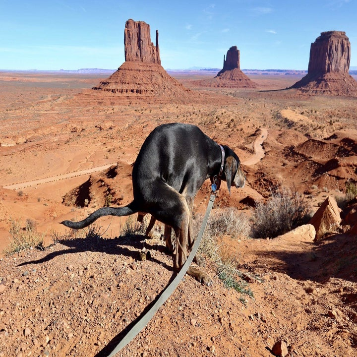 dog pooping in a desert setting