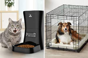 A cat eating from an automatic feeder and a dog in a crate
