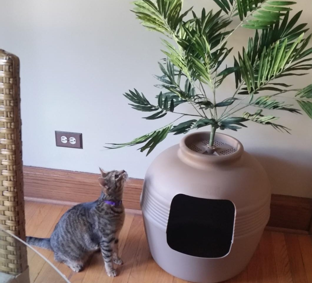 The litter box standing next to a curious cat
