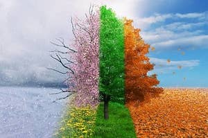 All the seasons in one tree