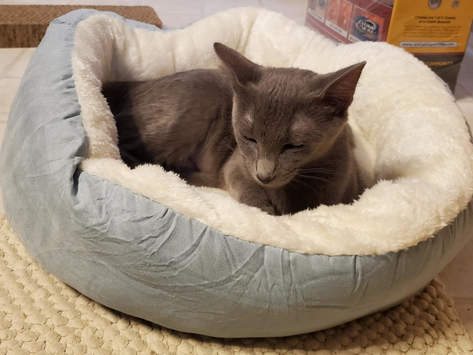 The donut bed, which is round and has a sunken middle section covered in sherpa-like material