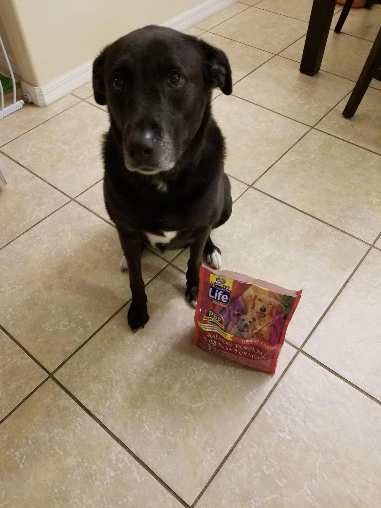 The bag of dog food