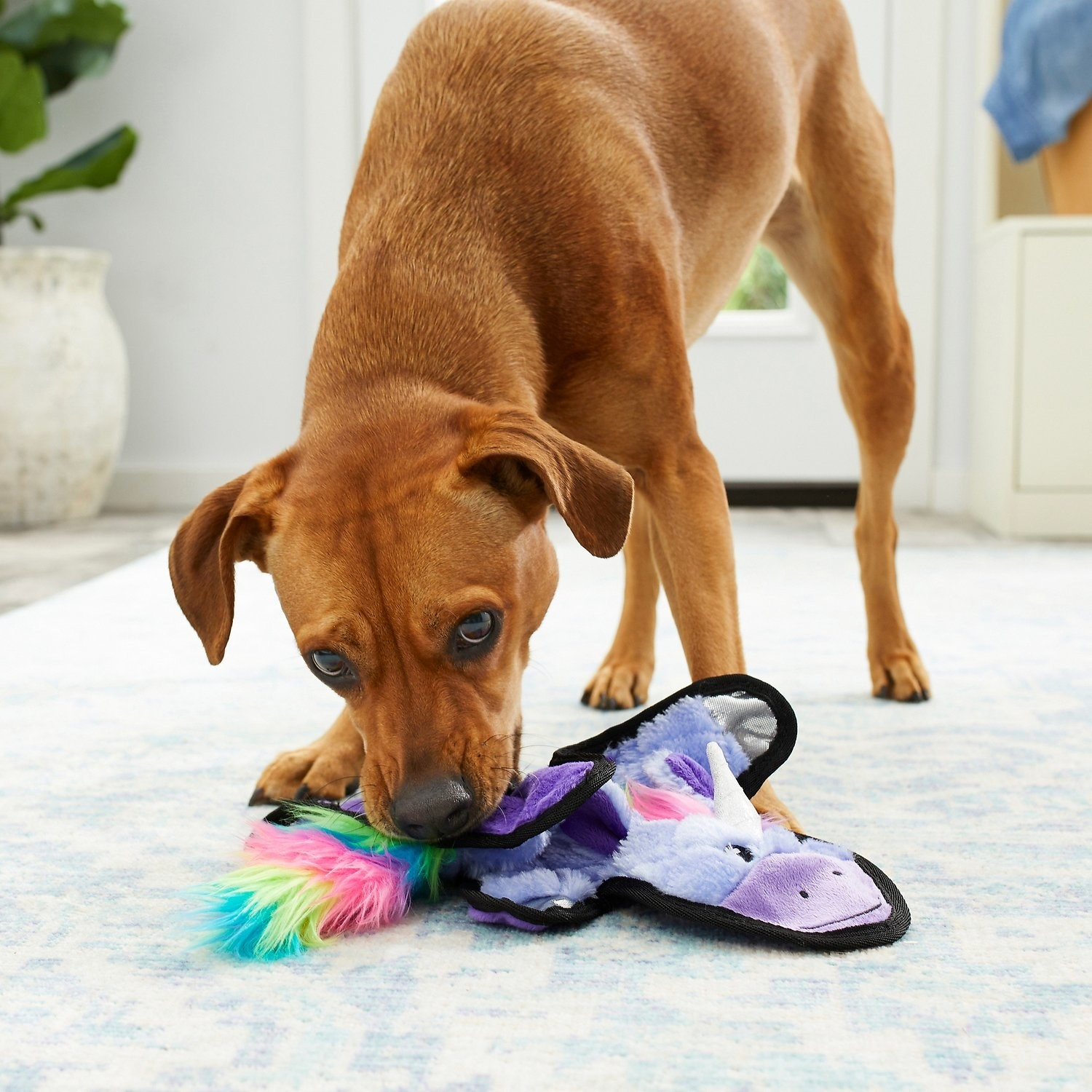 A dog chewing on the unicorn chew toy