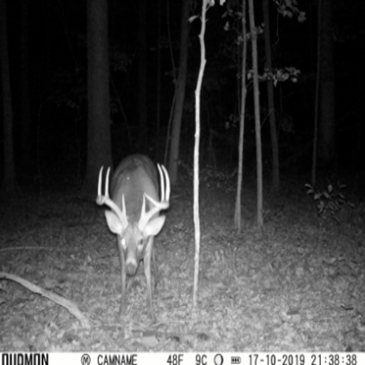 reviewer pic of a deer caught on camera