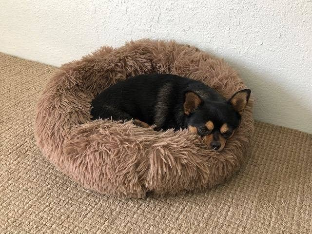 The dog bed, which is small, and made of a shaggy, faux-fur-style material
