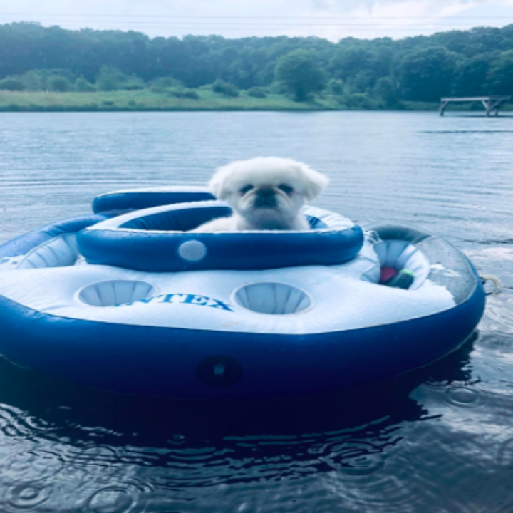 dog floating on a lake in a cooler