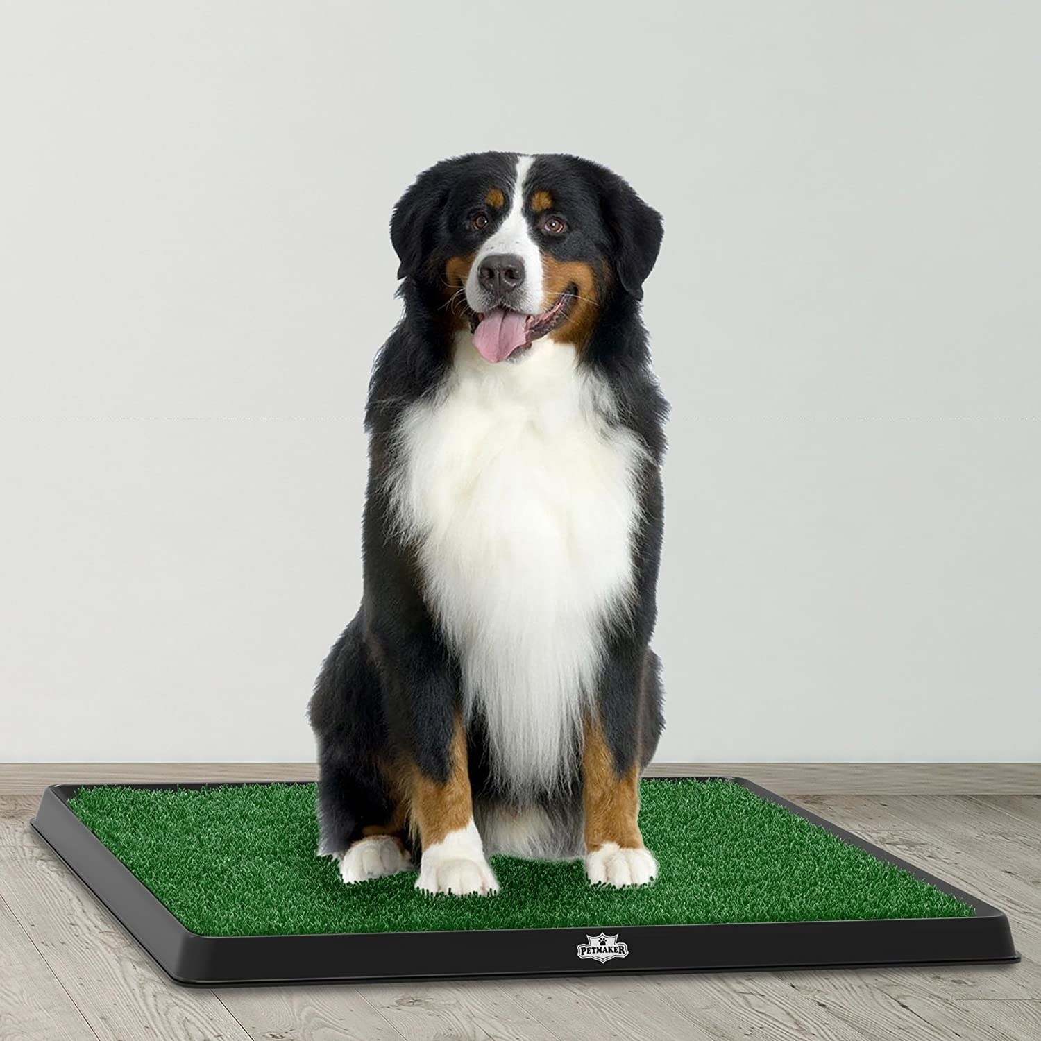 dog on grass mat