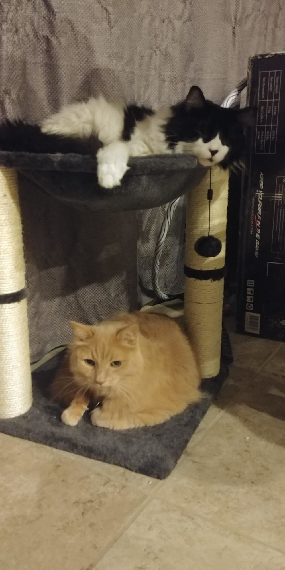 The hammock, which has a carpeted base, two scratching post pillars, and a soft hammock hanging between the top of the two posts