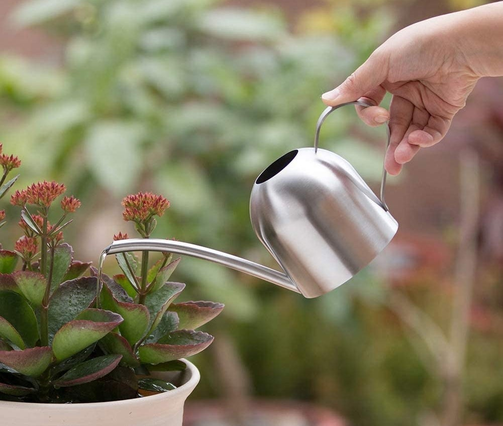 A hand waltering a succulent plant with a small, long spout watering can