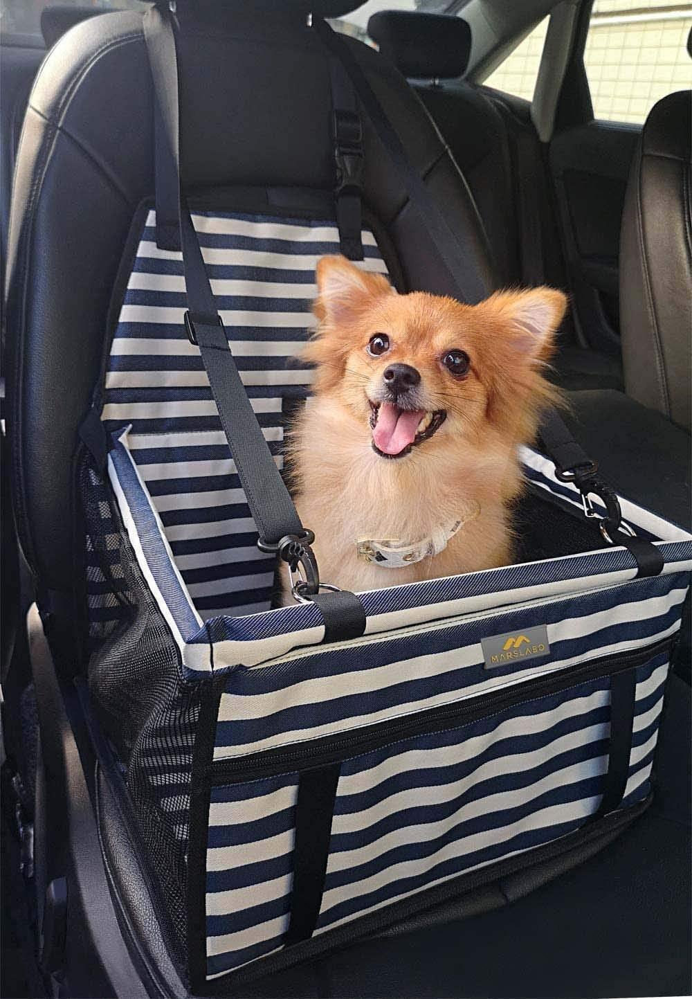 A Pomeranian sits in the blue stripes marslabo dog car seat