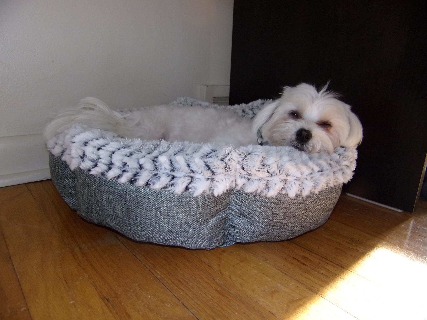 reviewer image of a dog lounging in their Pet Craft Supply memory foam dog bed