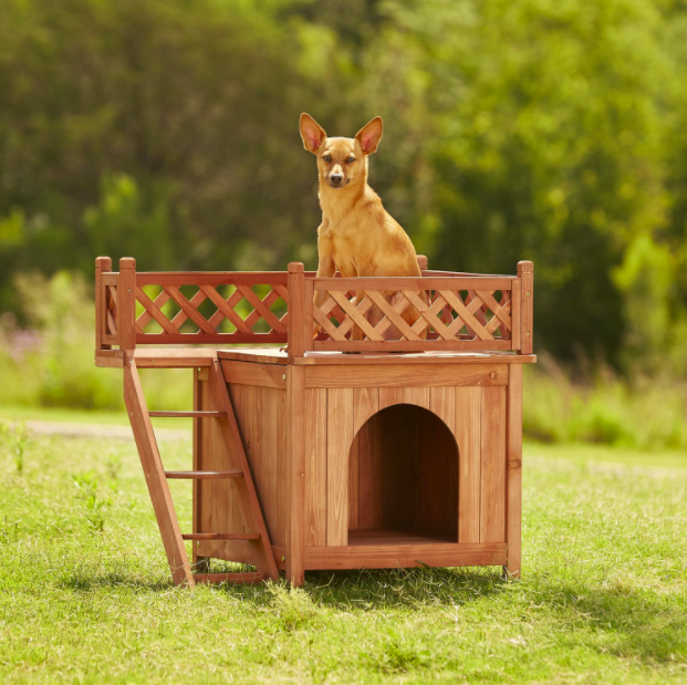 A dog sits on top of the room with a view wooden dog house
