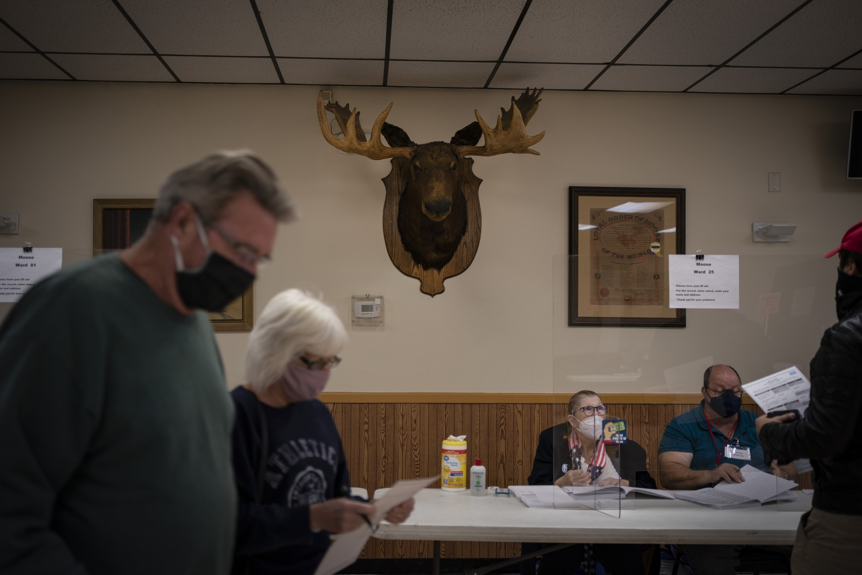 People voting underneath a giant moose head.