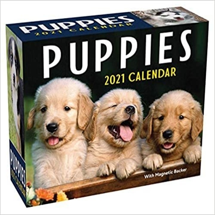 The box; three golden retriever puppies are pictures