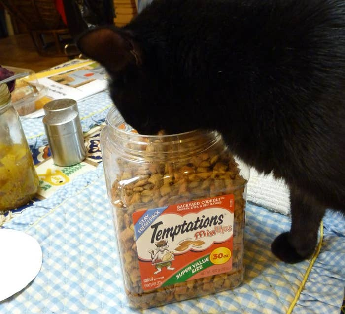 A cat eating from an opened tub of Temptations