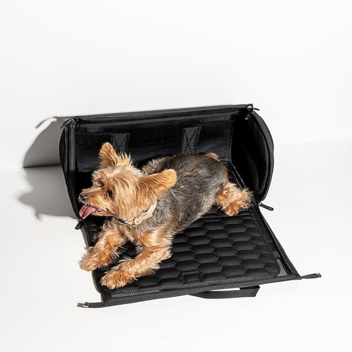 yorkie in the carrier