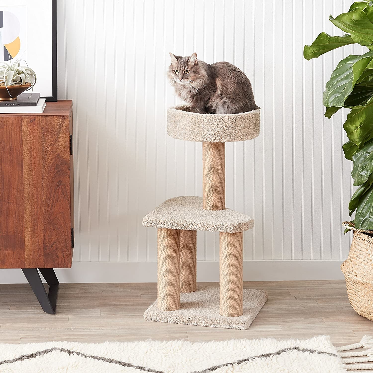 A cat on the top tier of the cat tree