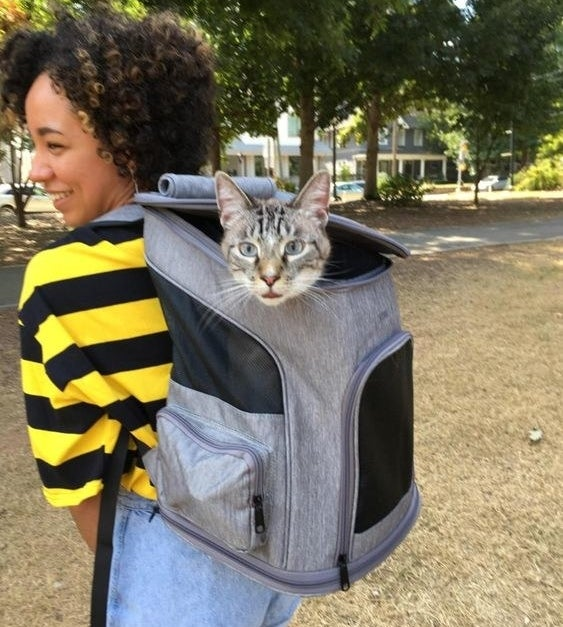 Reviewer with cat in the the backpack