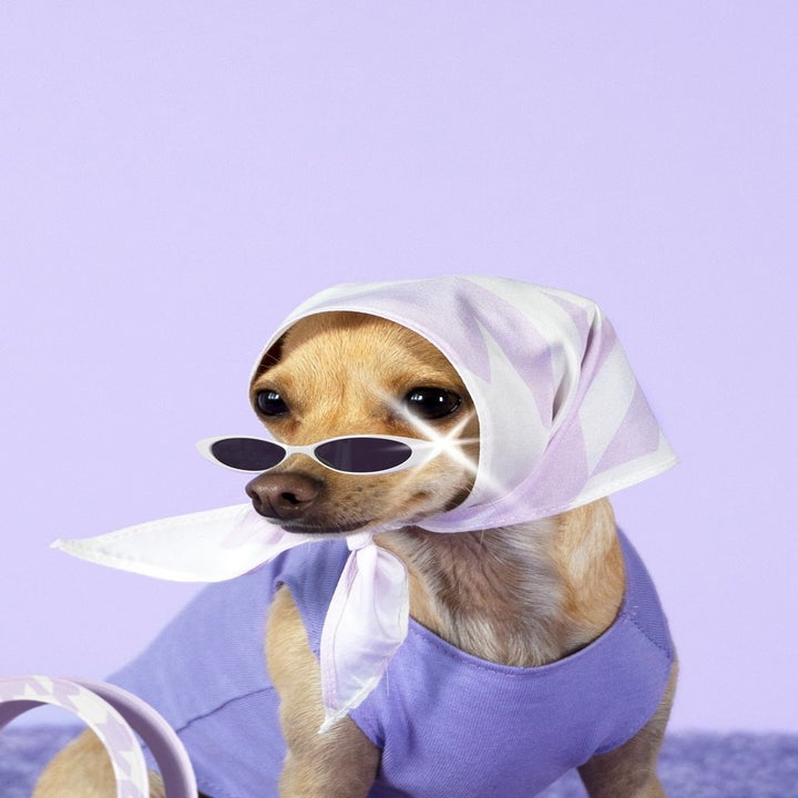 Boobie wearing Boobie's Tooth scarf