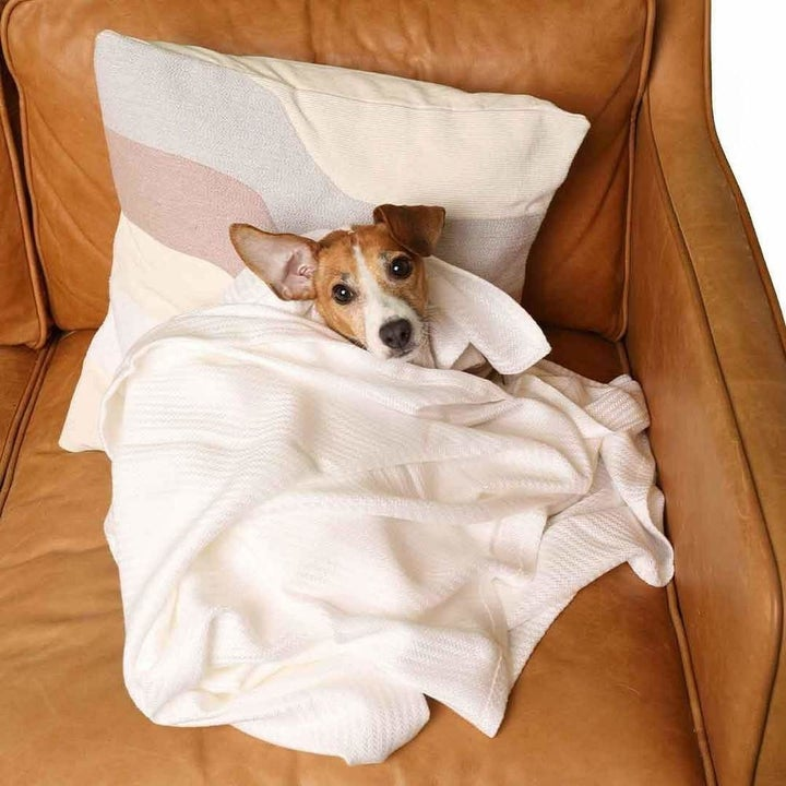 the throw blanket with a dog snuggled inside