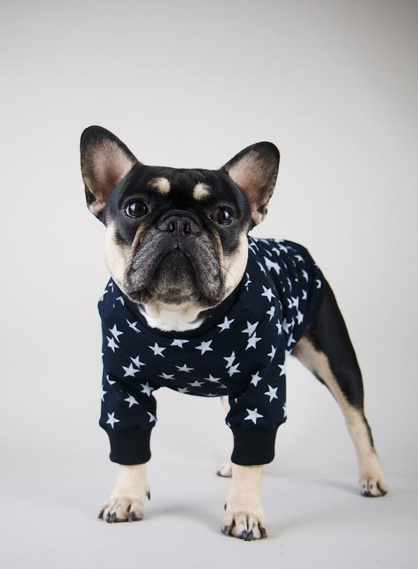 A dog crewneck sweatshirt with little stars all over it