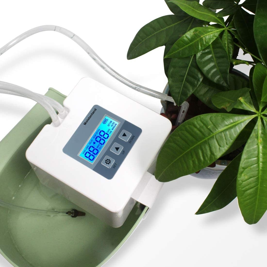 The irrigation system with its tube in a plant pot