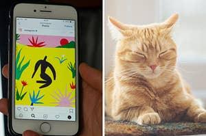 左边是一部手机,右边是一张Instagram照片,一只猫在睡觉