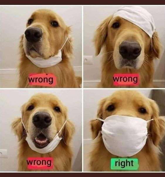 A cute dog demonstrates the wrong and right ways to wear a mask