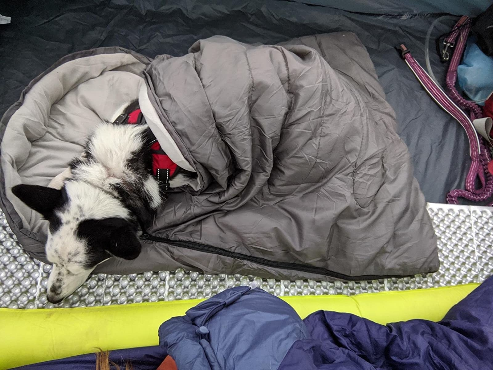 reviewer image of a dog in the cheerhunting dog sleeping bag