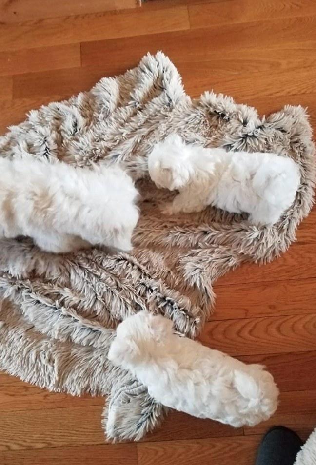 The faux fur shag blanket
