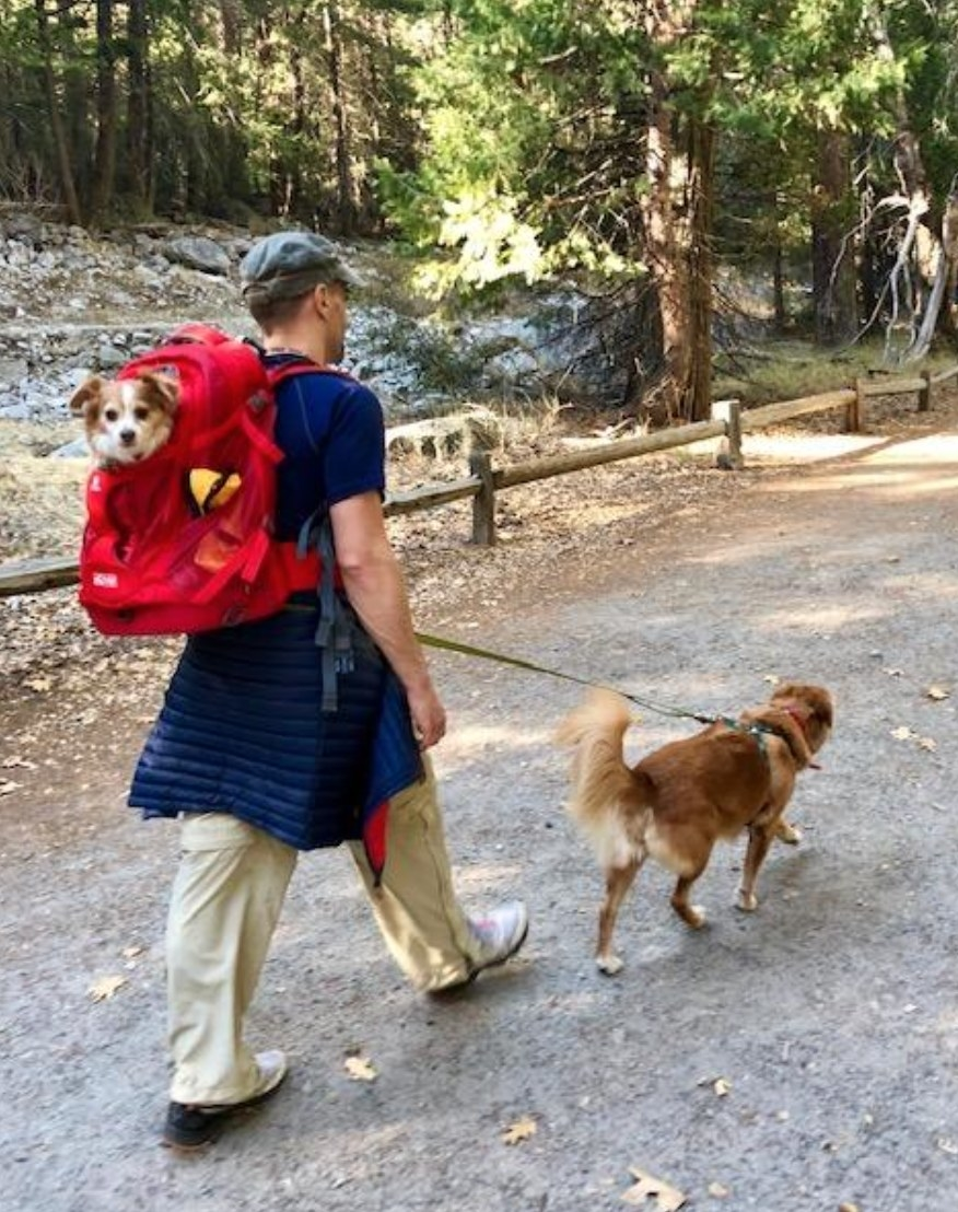 The dog carrier backpack