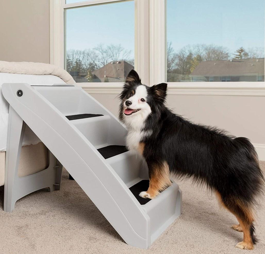The plastic dog steps
