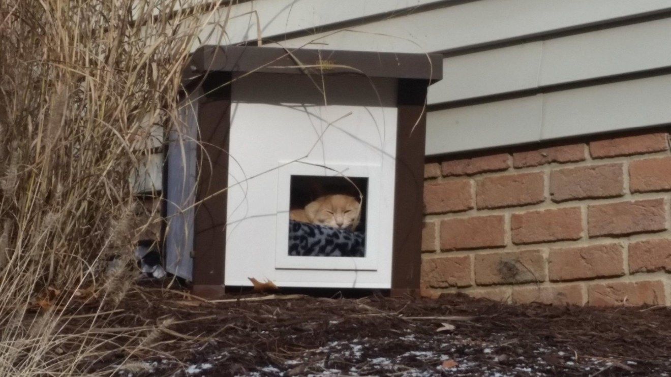 The outdoor cat house