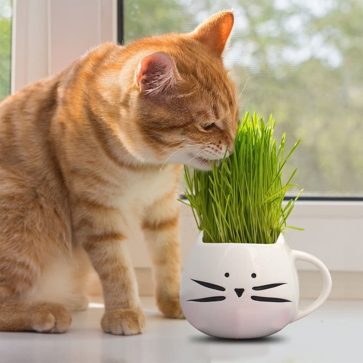 A white cat shaped mug with cat grass growing out of it that a cat is nibbling