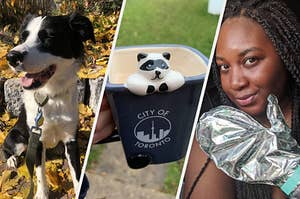 A dog with a leash, a mug shaped like a raccoon in a Toronto garbage bin, and a woman wearing foil hand masks