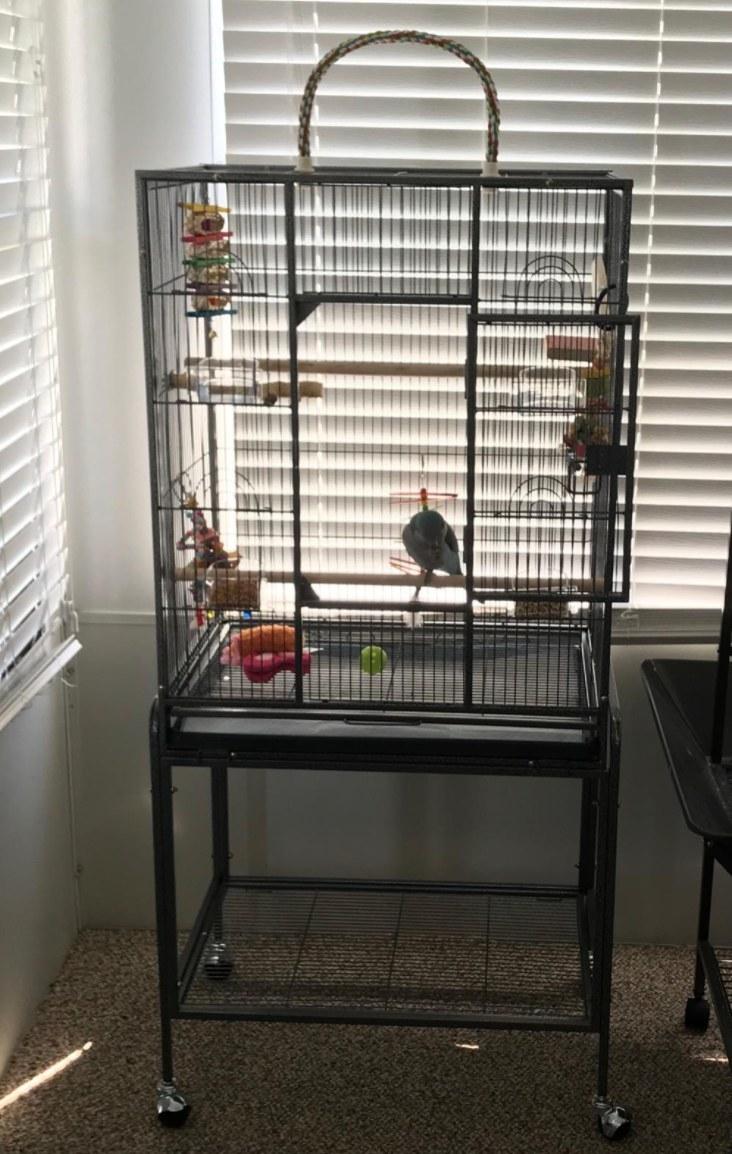 The spacious bird cage
