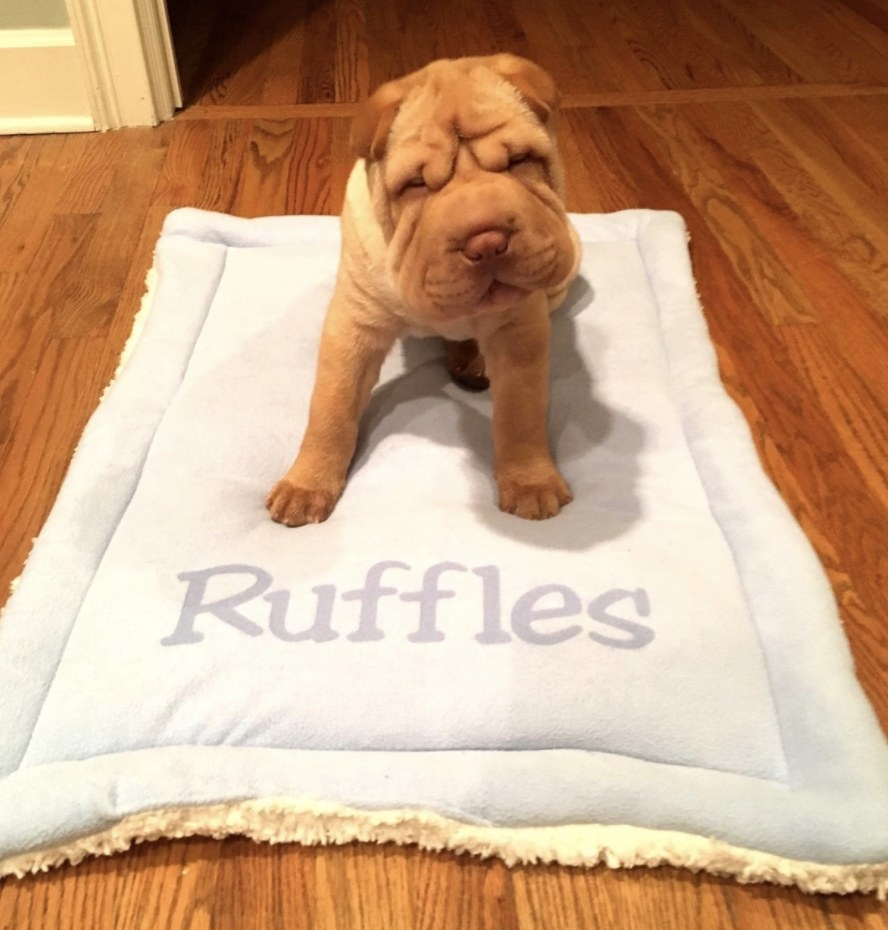 A puppy on a personalized mat