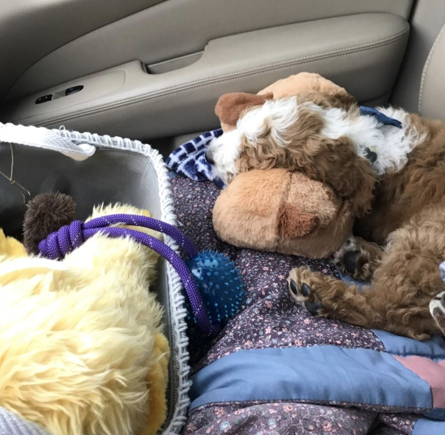 A puppy is laying in the passenger seat of a car with a snuggle puppy and a blanket