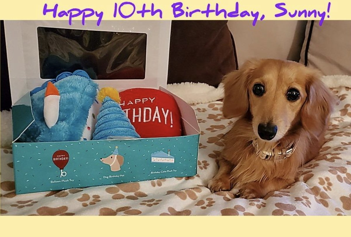 A dog is sitting next to a box set of birthday gifts