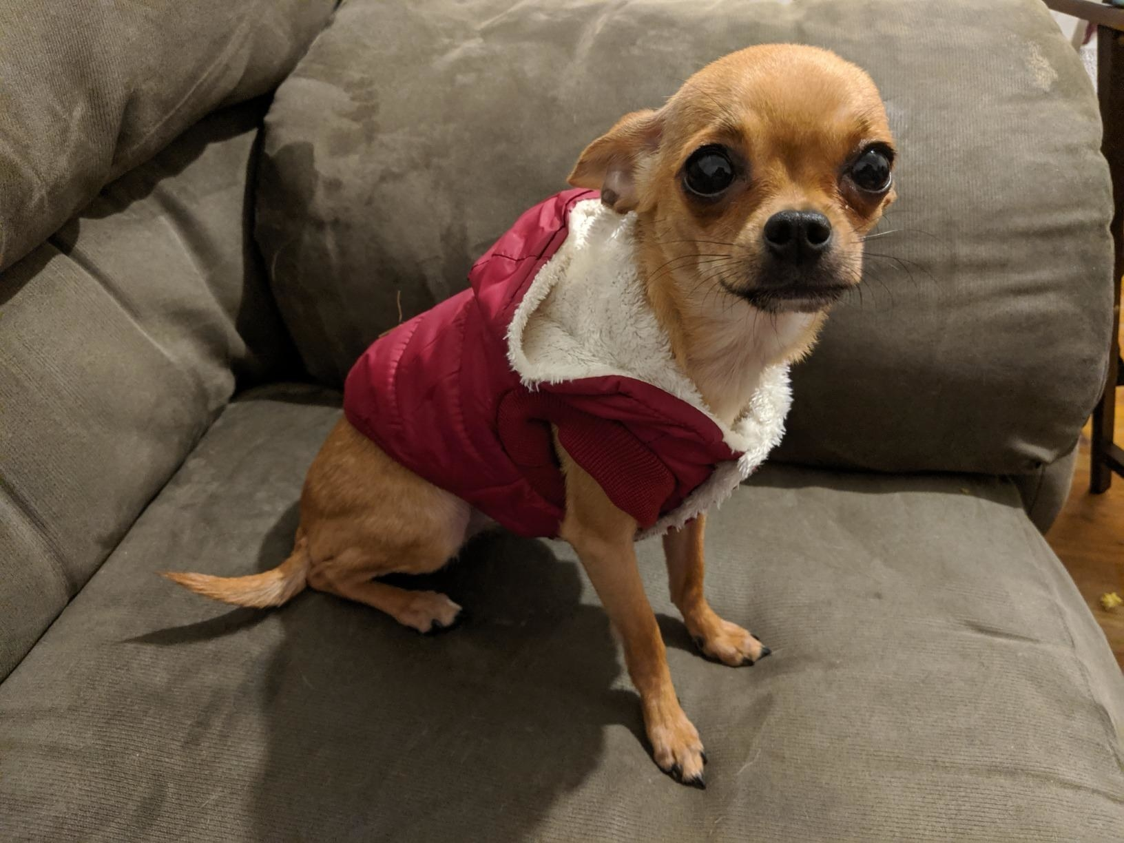 reviewer image of a dog in the fleece lined dog hoodie