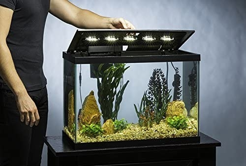 The fish tank with the LED lights shining into it