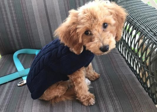 A dog wearing the sweater