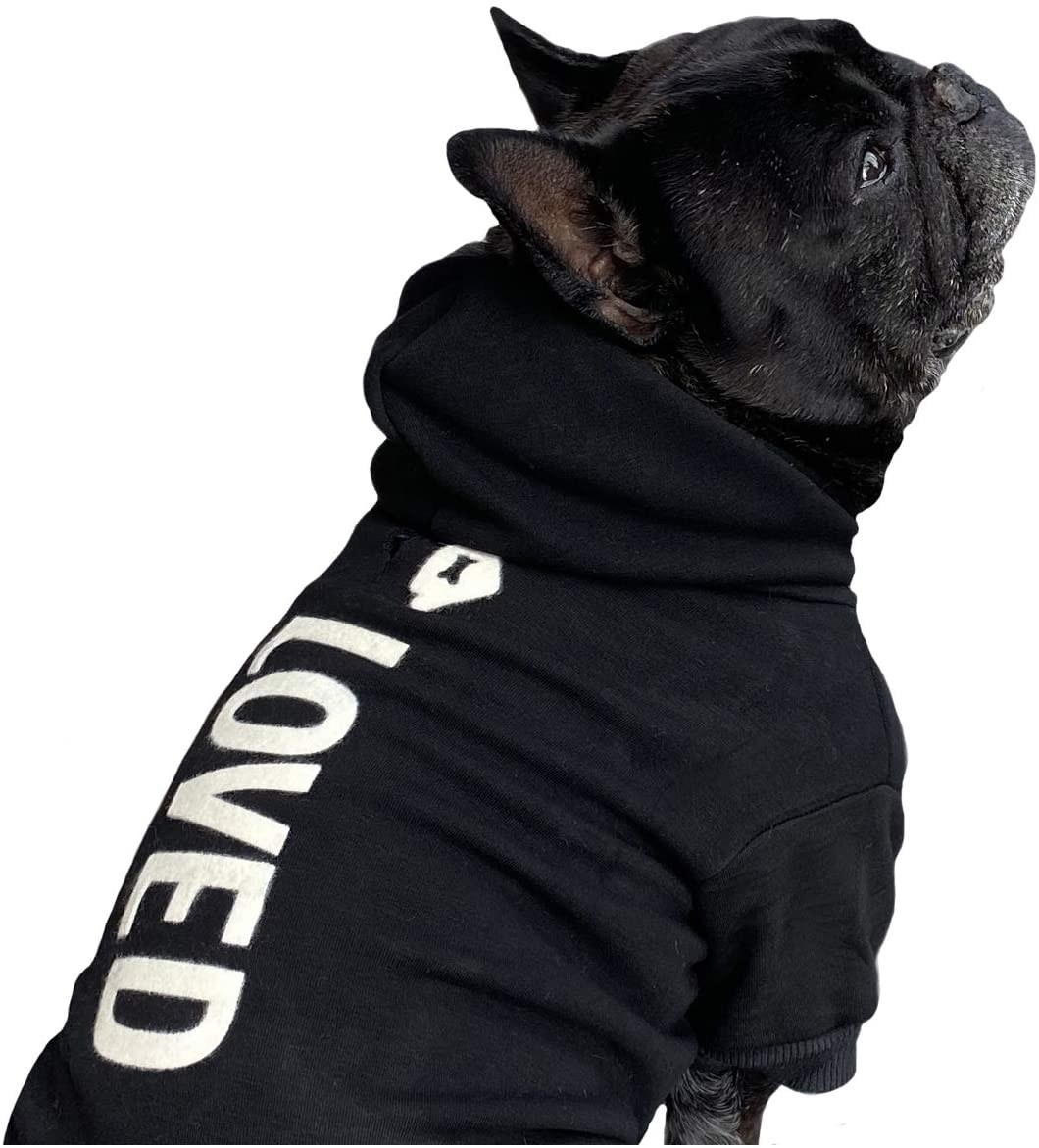 A dog in the black sweatshirt