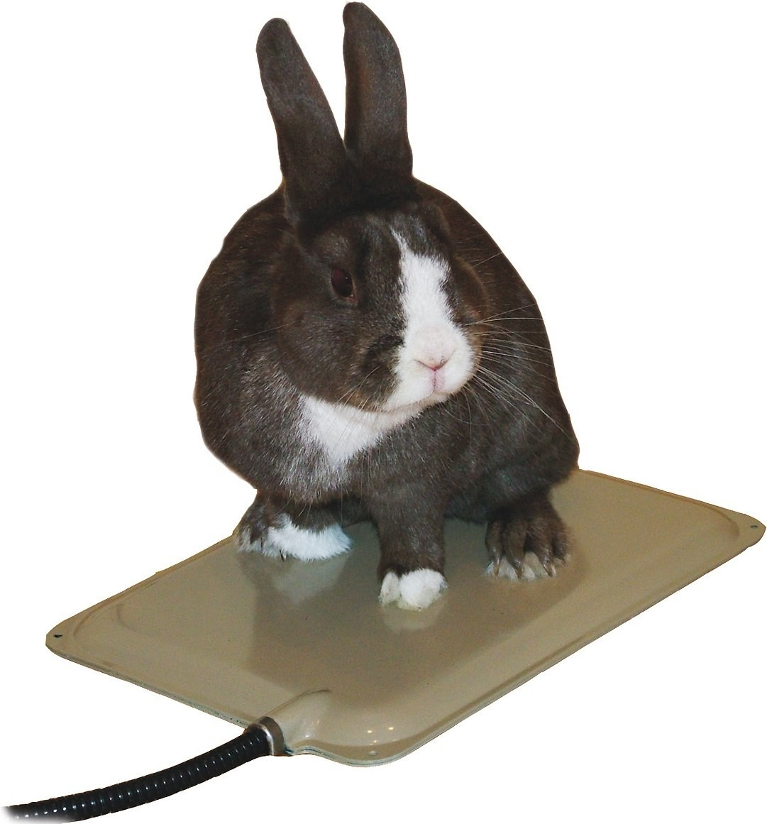 A rabbit on the heated pad